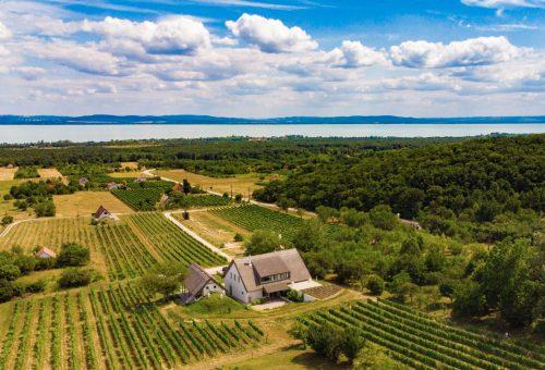 Zöld-fehér bor és gasztrotúra a Balaton-felvidéken