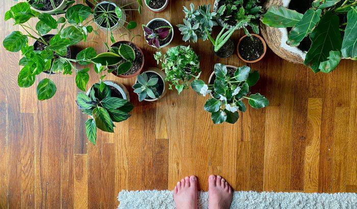 Trükkös és stresszmentes virágöntözési módszer a TikTokról