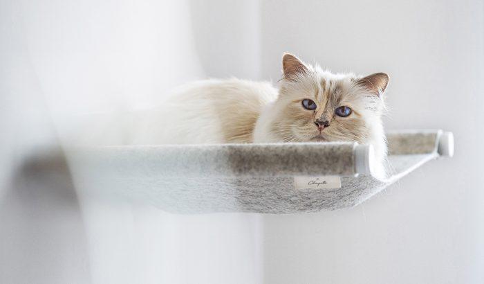 Lagerfeld macskája függőágyat tervezett