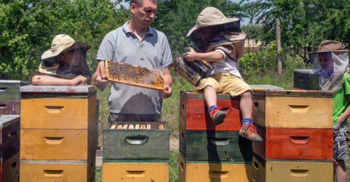 """""""Egy csapat vagyunk az asztalnál és a vállalkozásban is"""" – egy magyar családi méhészet napjai"""