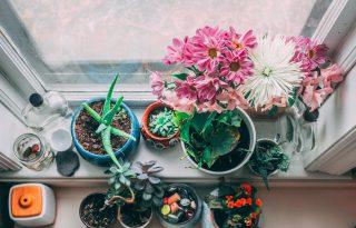6 illatos szobanövény, ami nyarat varázsol a télbe