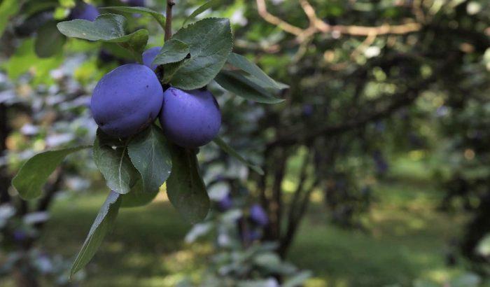Aszalt körtés-diós-étcsokis gyümölcskenyér