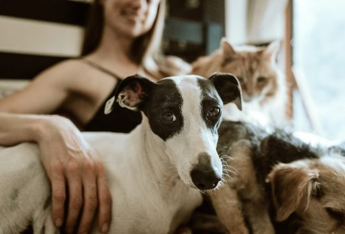 Ezekre a meditációkra minden friss kutyatulajnak szüksége van