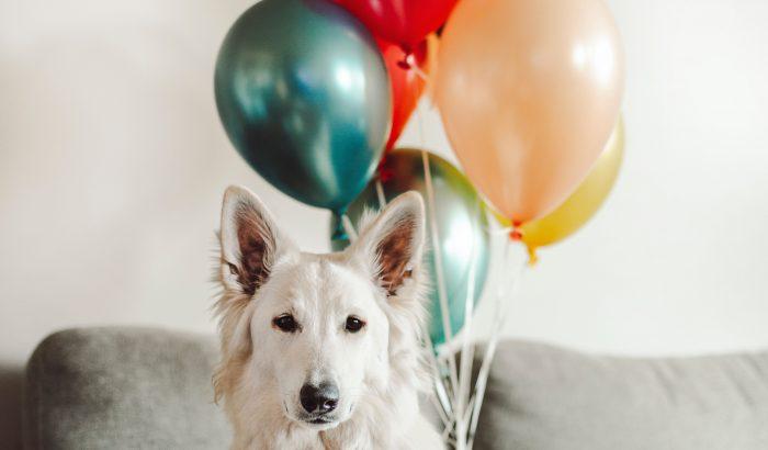Idős kutyák, egy kutatás és az emberi öregedés titkai