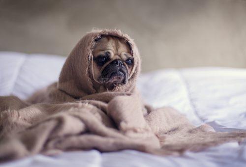 Kutyasétáltatástól egy kiadós zuhanyig: ezt teszik a pszichológusok, ha rossz napjuk van