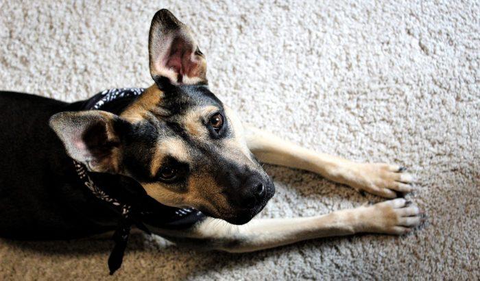 Jótékonysági live stream buli a kutyák megmentéséért
