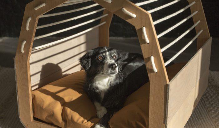 A legmenőbb magyar kutyaágy társadalmi vállalkozás segítségével készült