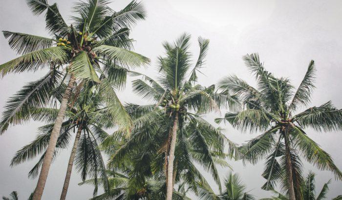 Kókuszdióval is fizethetnek Balin az egyetemisták a koronavírus miatt