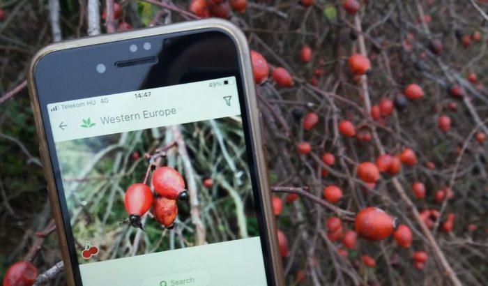 Aki a növényeket szereti – egyszemélyes botanikaszakkör