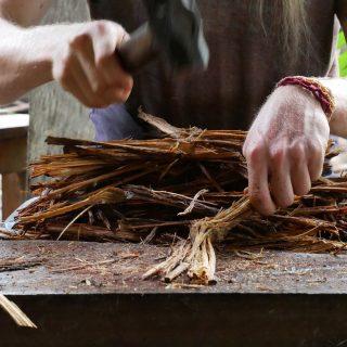 Növényi tanítómesterek – mi az az ayahuasca?