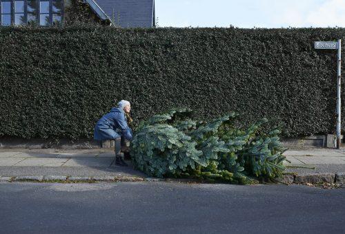 Élő fenyő, műfenyő, alternatív fa: na de melyik a legökotudatosabb?