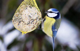 Te tudod, hogy kell jól csinálni a téli madáretetést? Ez az ingyenes plakát segít