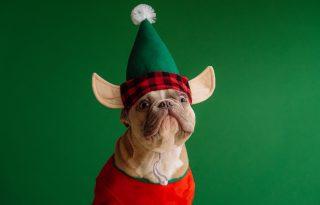 Itt a világ első karácsonyi dala kutyáknak!