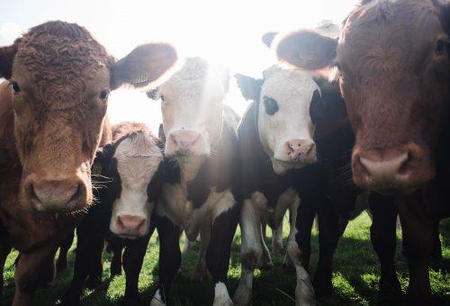 Veganuár-rekord várható a koronavírus miatt
