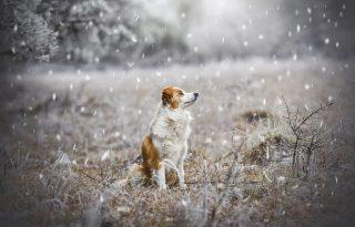 Mindenki kutyát akar, de hol végzik az ebek a járvány után?