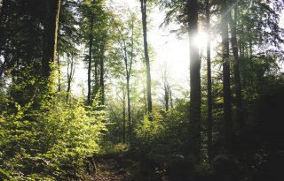 Hangutazással a világ erdeiben barangolhatunk