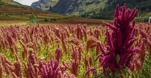 Quinoatartalmú szemkörnyékápolót dobtak piacra