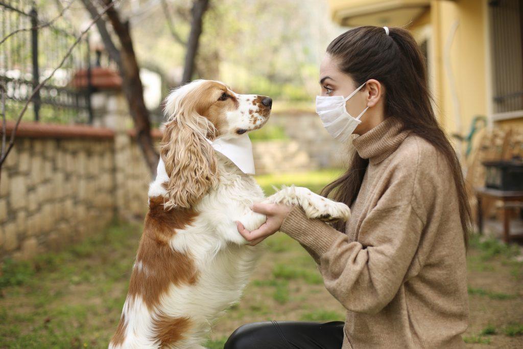 kutya-macska-vedooltas-koronavirus