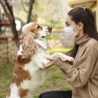 Be kell oltani a kutyákat és macskákat is Covid ellen?