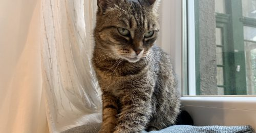 Örökbe fogadtunk egy szenior cicát, aki kicsit minket is megmentett