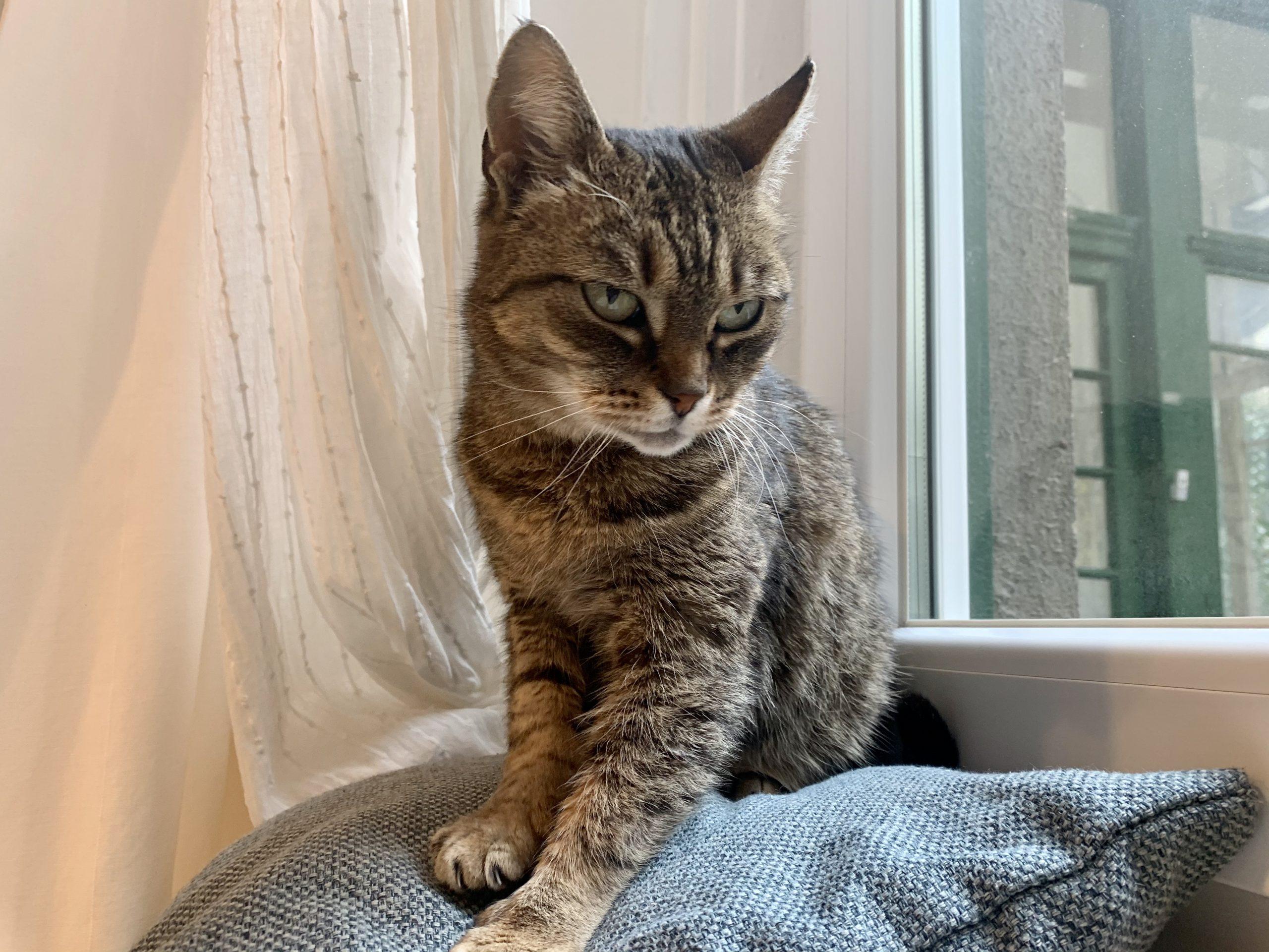 szenior-macska-orokbefogadas