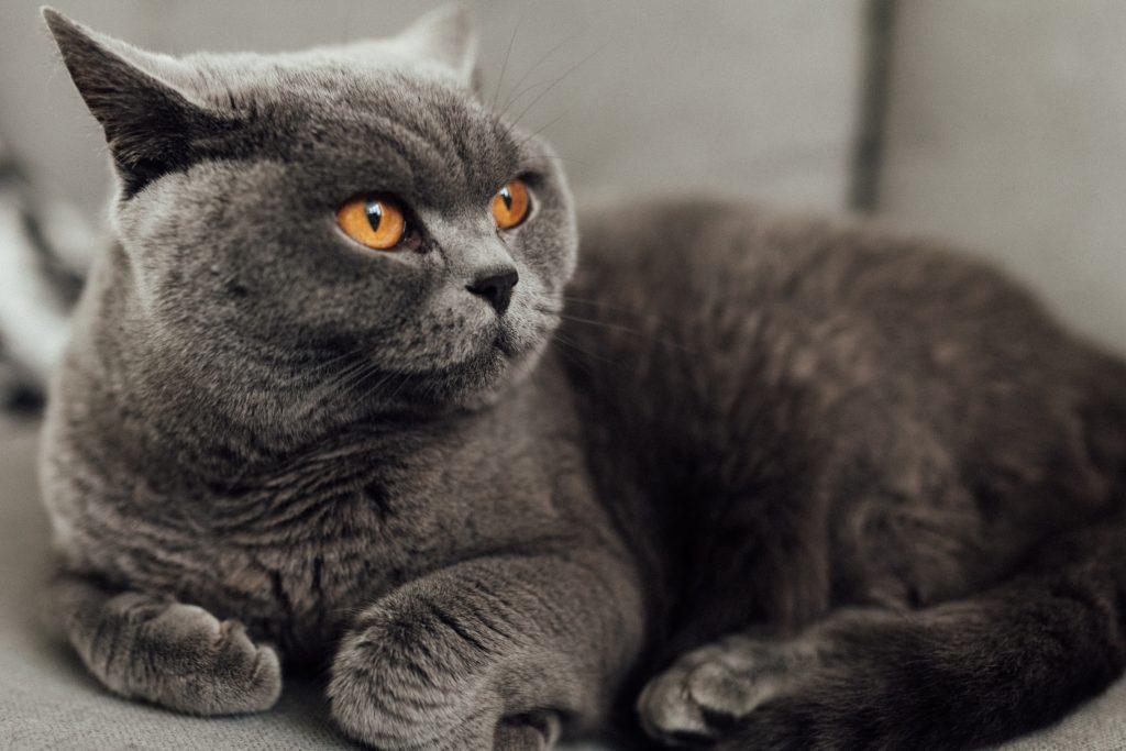 macska-horoszkop-csillagjegy