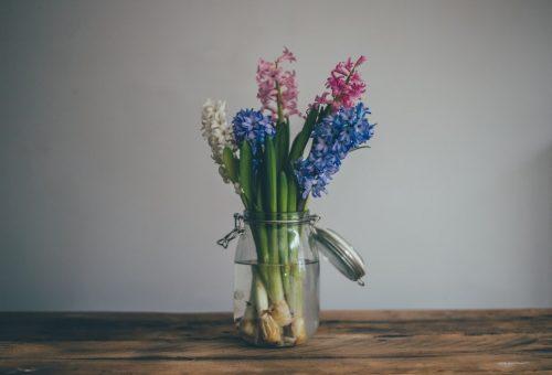 Növénymama: hagymagumós, illatos virágokat a lakásba!