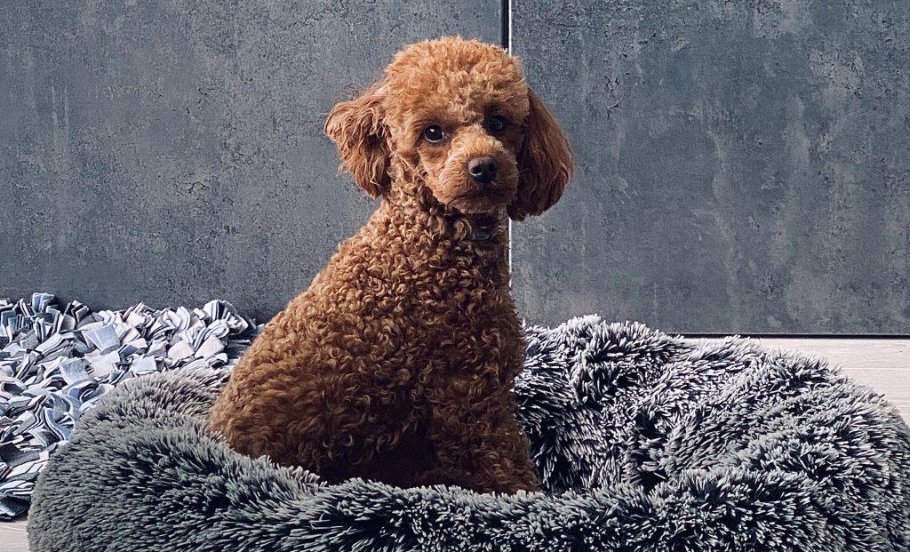 csillagjegy-kutya-horoszkop
