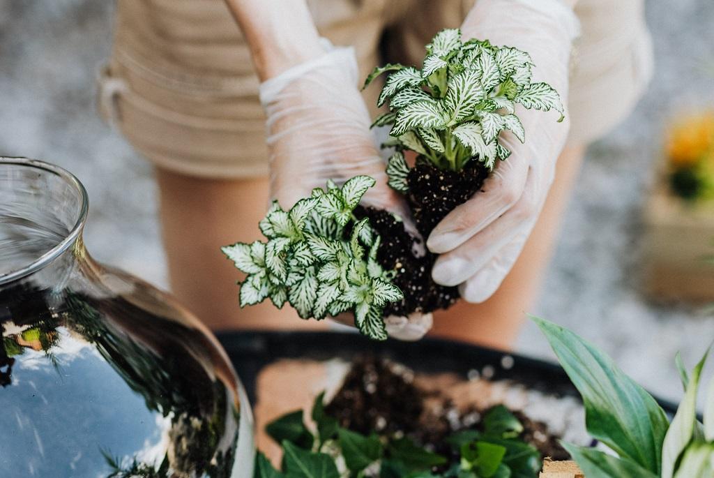 Kis fényigényű szobanövények