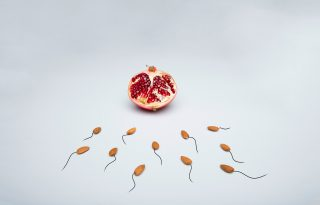 Csökkenő spermaszám fenyegeti az emberiség túlélését