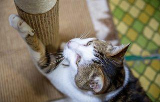 Így előzheted meg, hogy a macskád mindent szétkarmoljon a lakásban