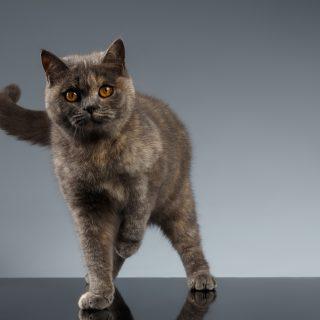 A te cicád is szokott az egyik mellső mancsát felhúzva álldogálni? Ezt jelenti macskanyelven!