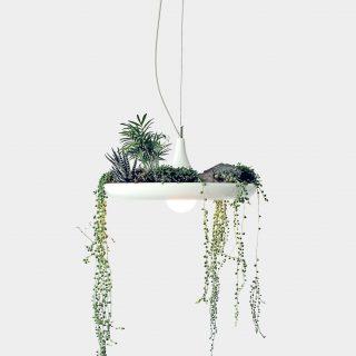 Csodaszép lámpa a növények szerelmeseinek