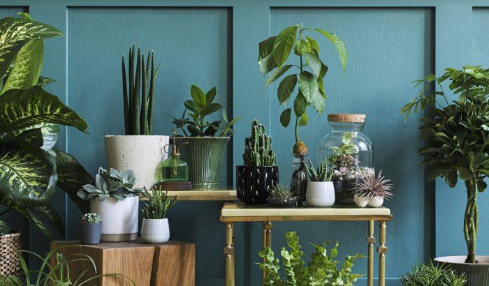 5 meglepő hely az otthonodban, amit feldobhatsz szobanövényekkel