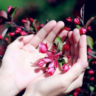 3+1 kihagyhatatlan virágos tavaszi illat