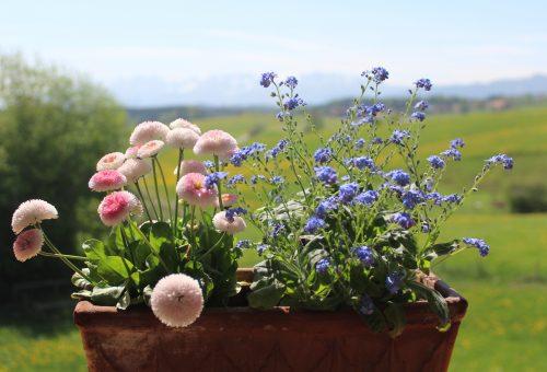 Növénymama: balkonnövényekkel jobbítunk a pandémián