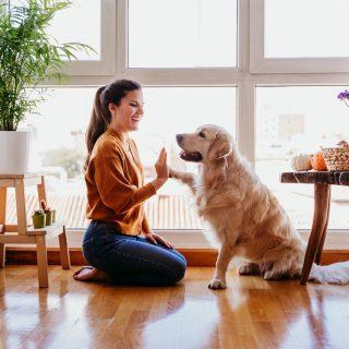 Tippek a kutyaiskolából: 5 trükk, amit te is megtaníthatsz a kutyádnak