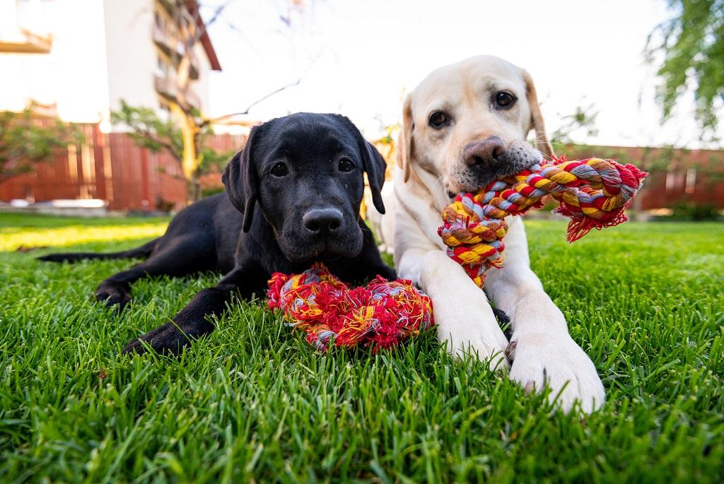 kutya kutyaiskola kutyakikepzes
