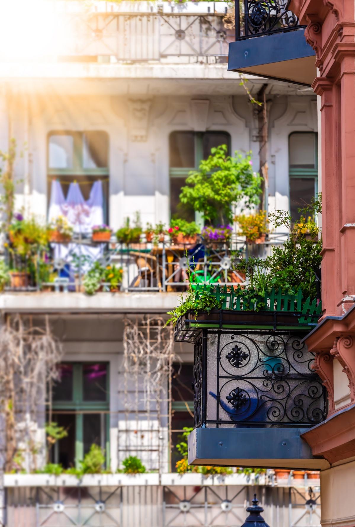 balkonlada-novenymama
