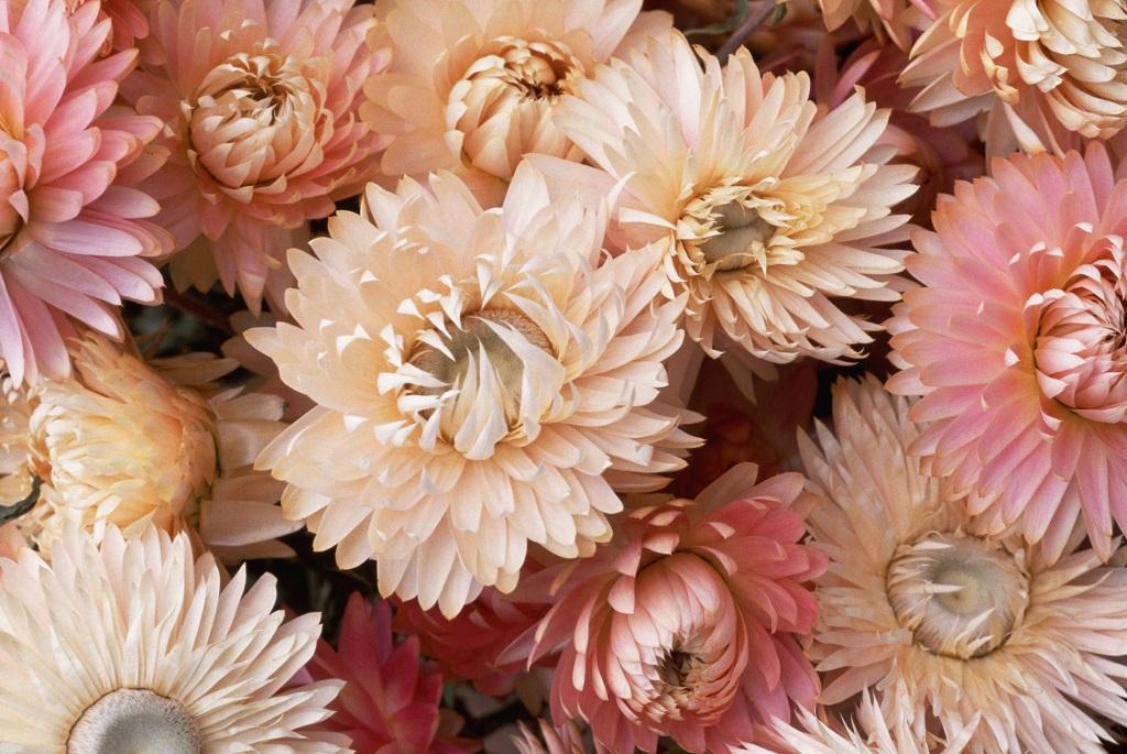 virág száraz virág virágszárítás virágtartósítás
