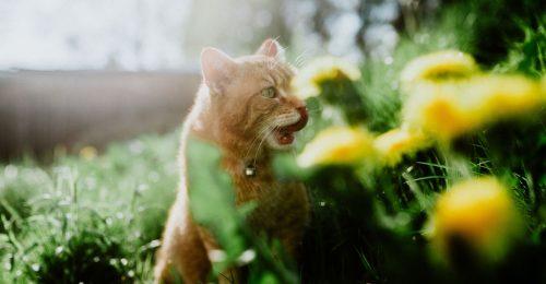 Cicatartók figyelem: 5 növény, ami mérgező a macskáknak