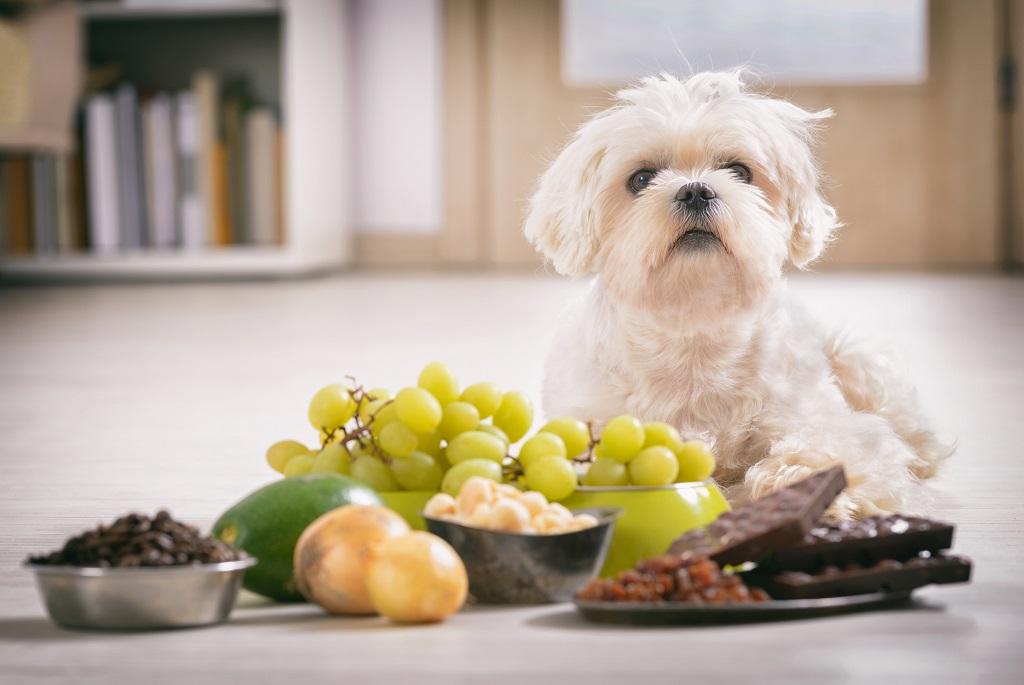 ezeket az eteleket soha ne add a kutyadnak