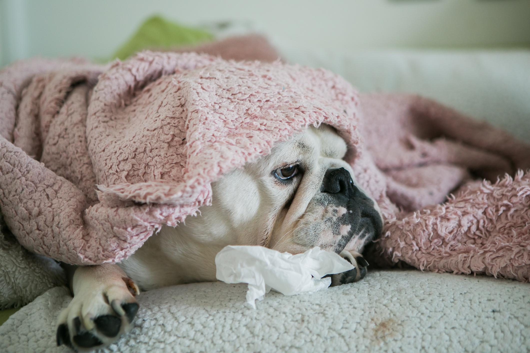 csalodott-kutya
