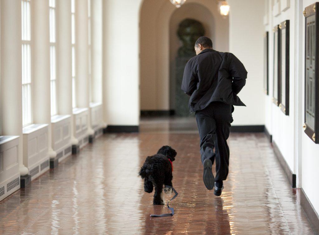 obama-csalad-kutya- meghalt