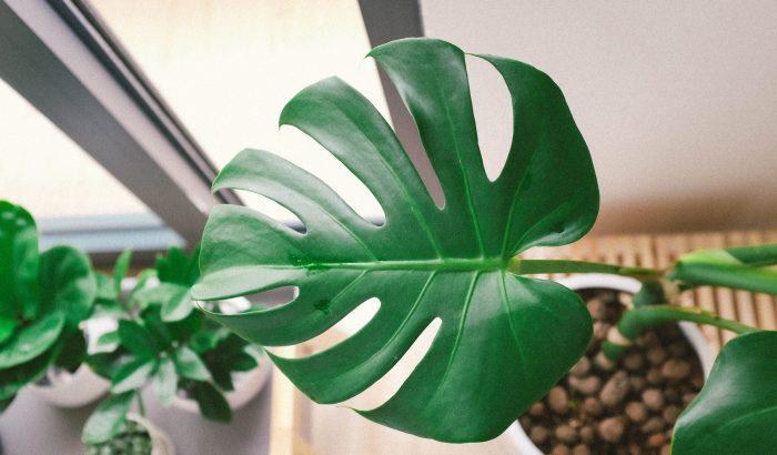 Bambuszpálmától a fikuszig: ezek a királyi család kedvenc növényei