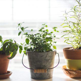 Növénymama: fűszerkert a teraszon