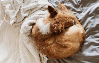 Horkolás és rühatka: beengedhetjük a kutyát az ágyunkba?