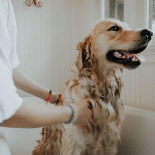 Kutyawellness otthon: kényeztető tappancsbalzsamtól a kutyabiztos fürdőbombáig