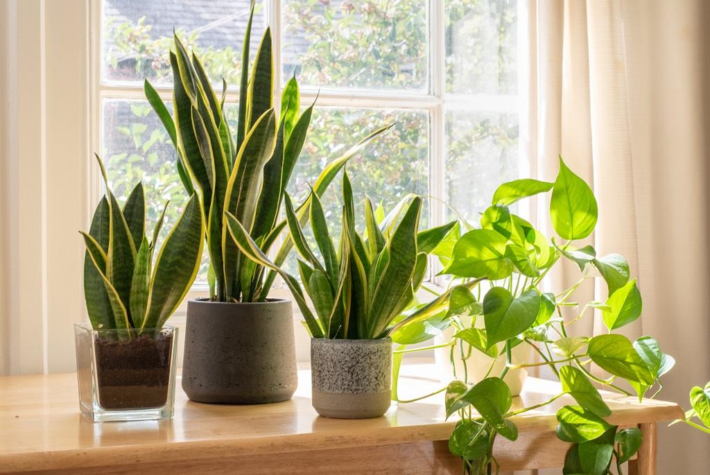 Tényleg sikítanak a növények, mert fáj nekik a metszés