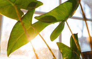 Így segítenek a növények, hogy jobban figyeljünk a saját lelkünkre